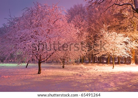 Trees covered with snow illuminated by colorful lights. Park scene. Night shot.