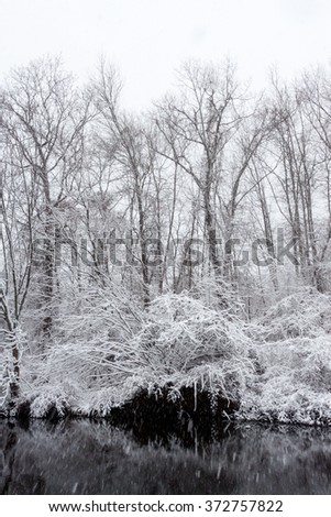 trees during a snow storm