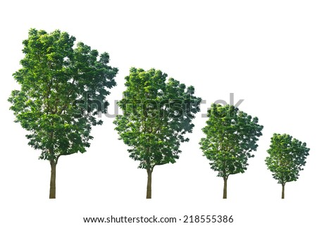 Trees from large to small isolated on white background - stock photo