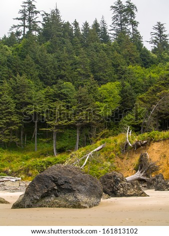 Trees Growing at the Edge of a Beach - stock photo