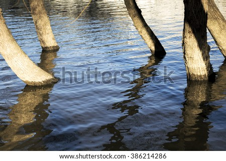 Trees growing from the swamp - stock photo