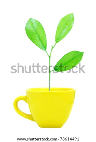 Trees growing in a cup isolated - stock photo