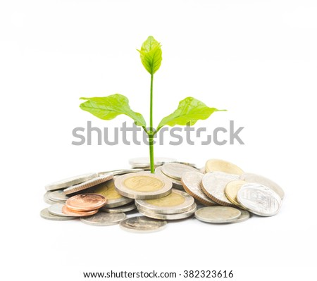 trees growing on coin isolated on white background,save money for prepare in the future,finance and money concept - stock photo