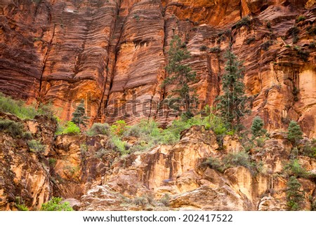 Trees High on Sandstone Walls, The Narrows, Zion National Park