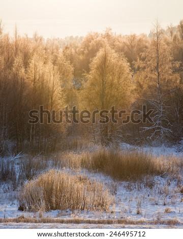 Trees illuminated by morning sun at winter - stock photo