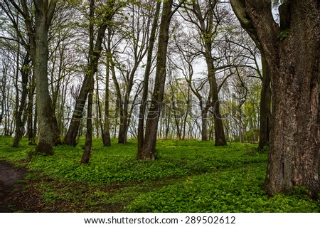 Trees in a clearing in the woods - stock photo