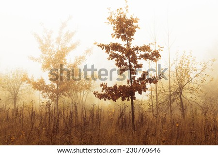 Trees in a fog in autumn scenery - stock photo