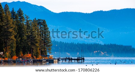 Trees in a forest at the lakeside, Carnelian Bay, Lake Tahoe, California, USA - stock photo