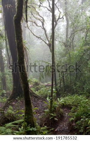 Trees in a forest, Costa Rica - stock photo