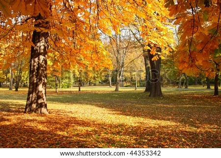 Trees in autumn in a nice park