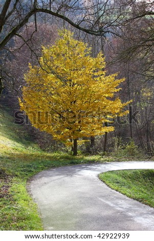 Trees in autumn on a nice day with vivid colors