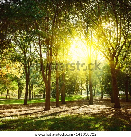 Trees in Central Park New York, USA. - stock photo