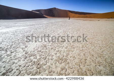 Trees in Deadvlei, or Dead Vlei, a white clay pan located near the more famous salt pan of Sossusvlei, inside the Namib-Naukluft Park in Namibia - stock photo