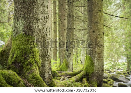 trees in deep green forest - stock photo