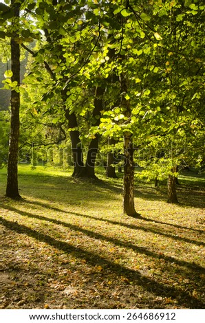 Trees in evening light in early autumn - stock photo