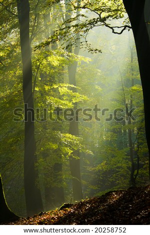 trees in fog-light - stock photo