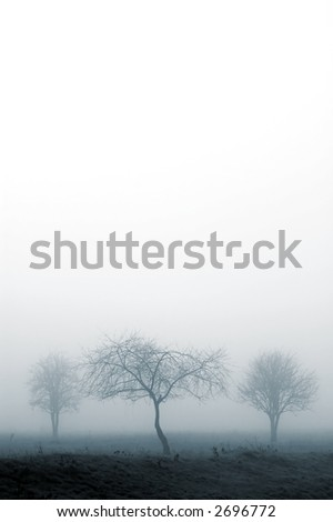 trees in fog with white for copyspace - stock photo
