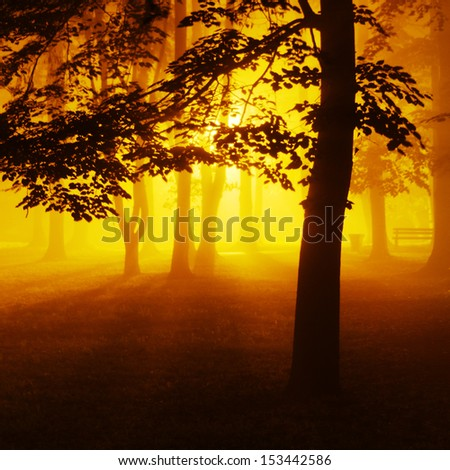 Trees in foggy park at night - stock photo