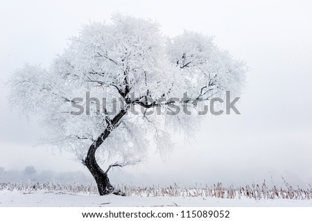 Trees in frost and landscape in snow against blue sky. Winter scene - stock photo