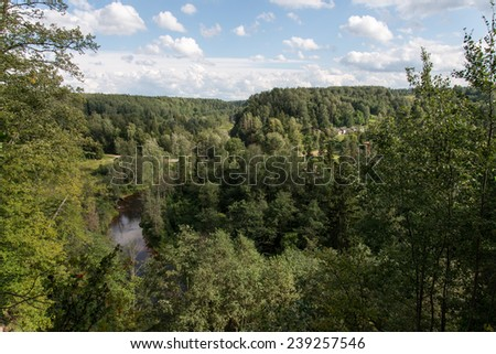 trees in green forest with moss and autumn colors. latvia. - stock photo