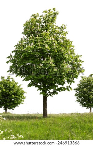 trees in landscape cut out on white background - stock photo