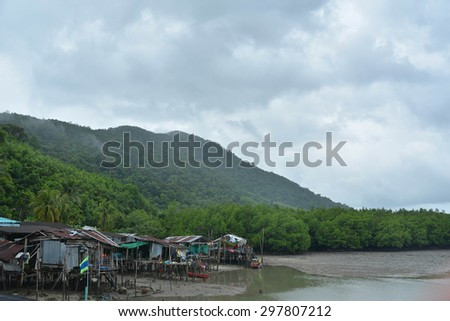 trees in mangrove rain forest,Koh Chang Island ,Trad Thailand - stock photo