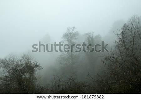Trees in Mist - stock photo