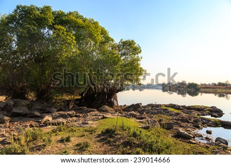Trees in morning light on the riverside in Africa - stock photo