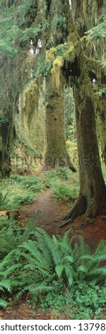 Trees in Olympic National Forest, Washington - stock photo