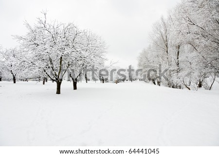 Trees in orchard covered by snow in winter day - stock photo