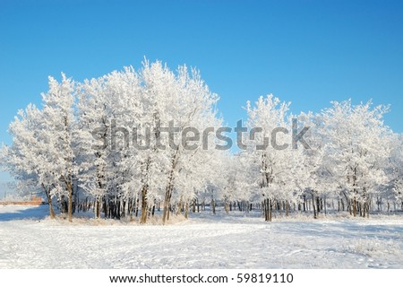 Trees in park covered with snow