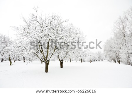 Trees in park fully covered by snow in winter day - stock photo