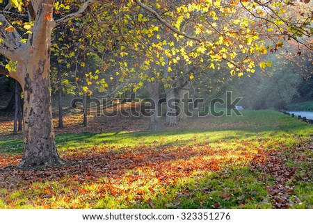 trees in park on a sunny day, Belgrade Serbia - stock photo