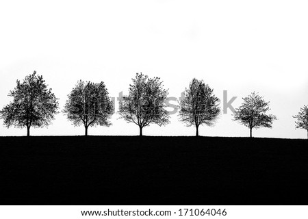 trees in silhouettes - stock photo