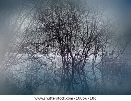 trees in swamp area on misty evening - stock photo