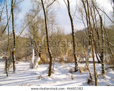 trees in swampland with fresh snow - stock photo