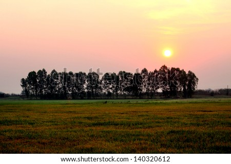Trees in the field - stock photo