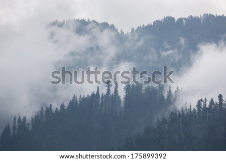 Trees in the fog and clouds, Himalaya - stock photo