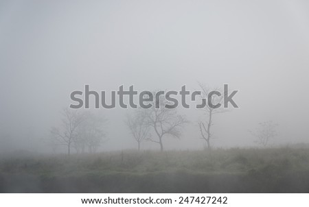 Trees in the fog, winter season - stock photo