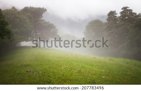 Trees in the forest and meadow in the mist - stock photo