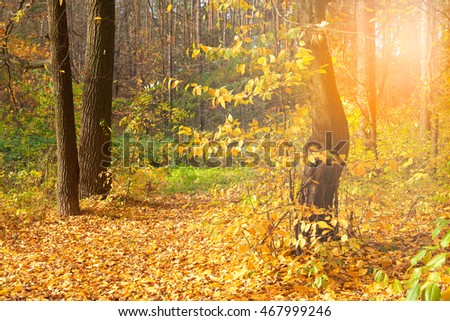 trees in the forest with leaves colored in gold