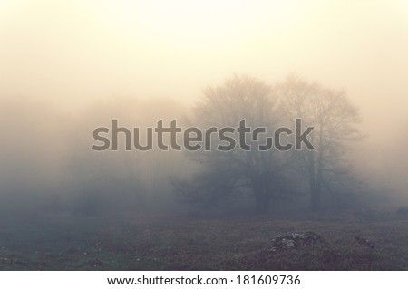 trees in the morning with fog and vintage filter effect - stock photo