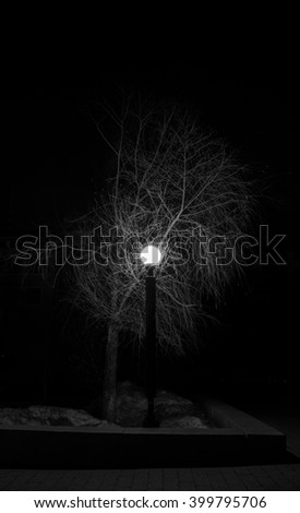 trees in the night - stock photo