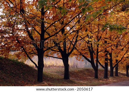 trees in the park - stock photo
