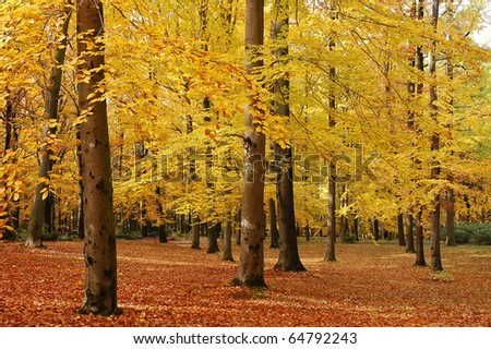 Trees in the park with leaves turning yellow, typical autumn scene - stock photo