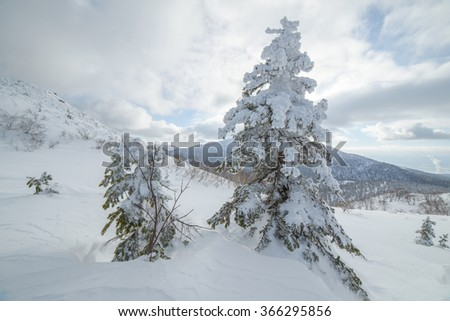 Trees in the snow, the winter in the mountains. Sakhalin Island, Russia.