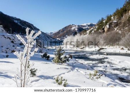 Trees in the winter. Sharoy district, Chechnya
