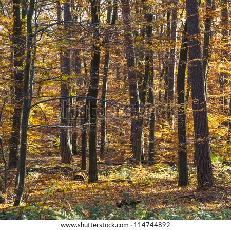trees in wild forest in indian summer colors gives a harmonic background