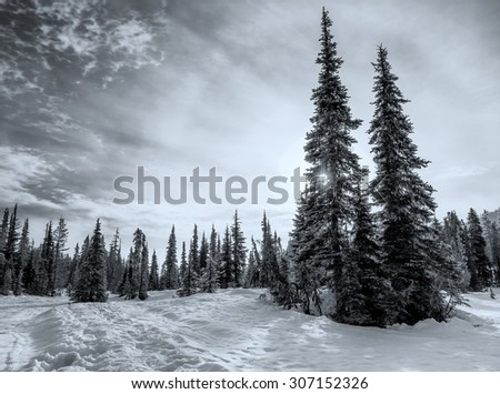 Trees in winter landscape in black and white - stock photo