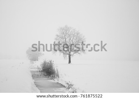 Trees in wintertime on a foggy day